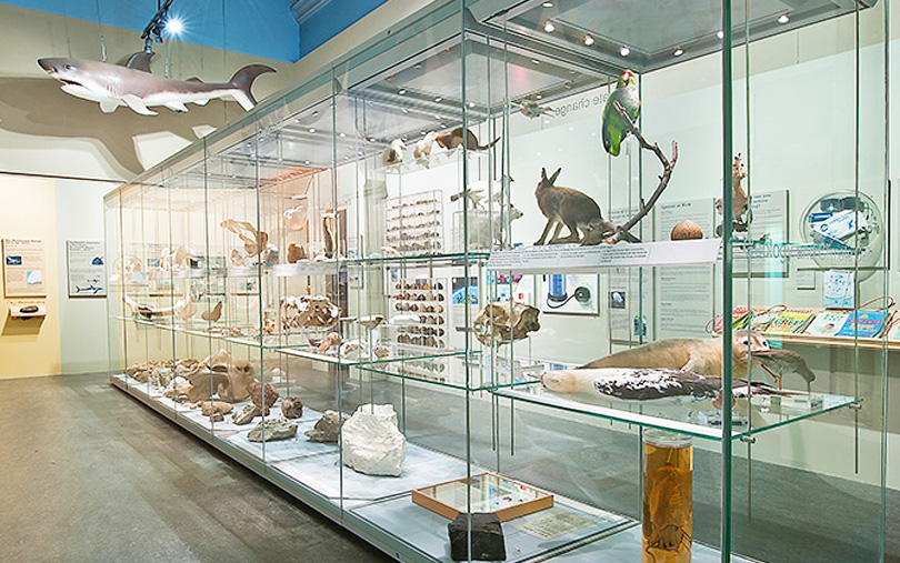 Colchester Natural History Museum Events
